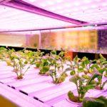 Indoor-Garten - Beliebte Pflanzenarten und Systeme